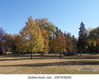 Beautiful Fall Trees in Grand Forks, North Dakota