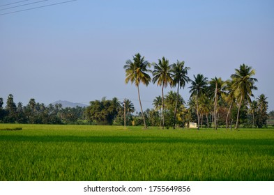 Beautiful farm country side landscape with coconut trees india