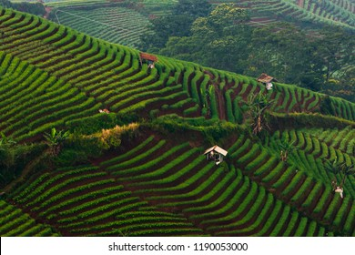 Beautiful Farm Land Formation At Argapura Majalengka Indonesia / Formasi Sawah Yang Indah Di Argapura Majalengka Indonesia