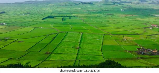 Beautiful farmLand green fields - black rock wall as divided line, in Terceira island, Azores, Portugal