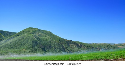 beautiful farmland irrigated by sprinkler system