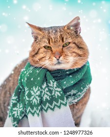 Beautiful fashion portrait of a cat wearing the knitted scarf. Cat sitting outdoors in snowy winter and looking up