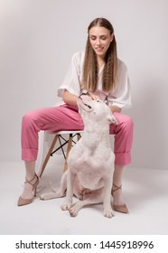 Beautiful fashionable young woman in pink suit sitting on chair with white staffordshire pitbull dog on white background. Frindship between human and dog concept
