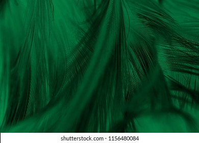Beautiful feather color light green and black pattern texture background