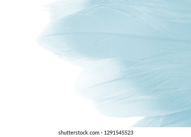 Beautiful feather color soft blue  turquoise isolated on white background