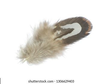 Beautiful feather isolated on white background