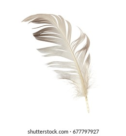 beautiful feather isolated on a white background
