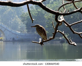 Beautiful feathered bird perched upon tree branch