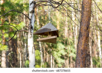 Beautiful feeder for birds and squirrels in the woods.