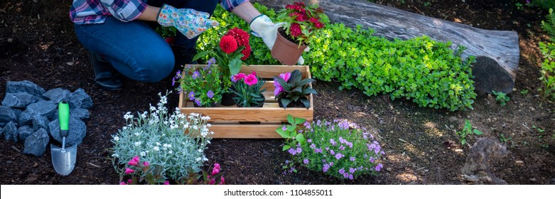 Beautiful female gardener holding a flowering plant ready to be planted in her garden. Gardening concept. Web banner. Landscape gardening business.