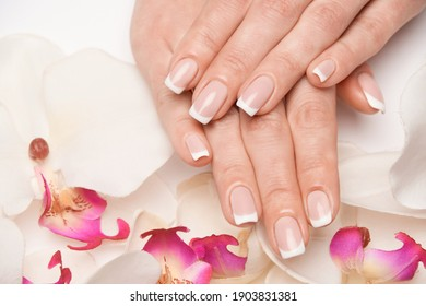 Beautiful Female Hands with French manicure over light grey background