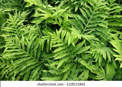 beautiful fern background