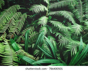 Beautiful of fern tropical leaves