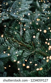 Beautiful festive spruce texture with sparkling fireflies on it, vertical bokeh view