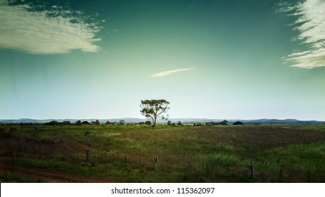 A beautiful field and blue sky, lonely tree