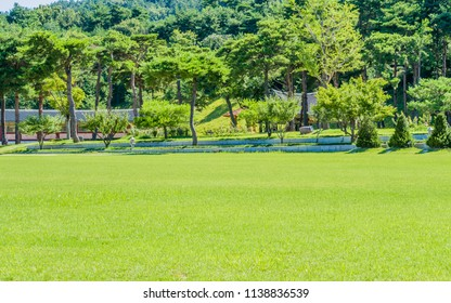 Beautiful field of green grass in public park with tiled roof buildings hidden by trees and bushes in the background.