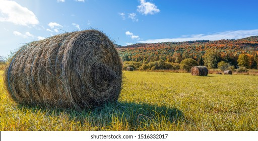 Beautiful field haystack rolls in autumn season. Haystacks harvest in fall landscape. Haystack rolls on gold agriculture field. Amazing view with rolled hay stacks in autumnal season.