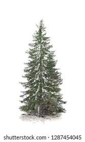 Beautiful fir covered with snow on white background