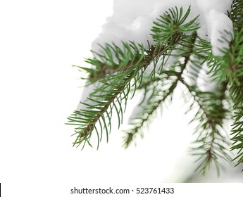 Beautiful fir tree covered with snow, close up view