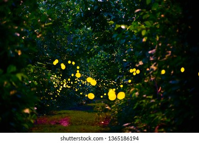 Beautiful firefly in the night at nature forest