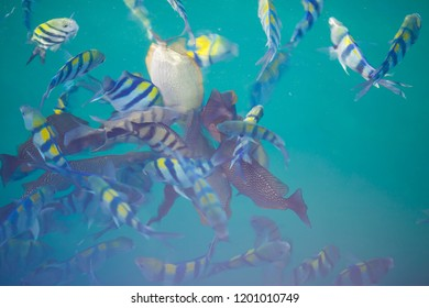 Beautiful fish in the clear turquoise water of the Gulf of Siamese