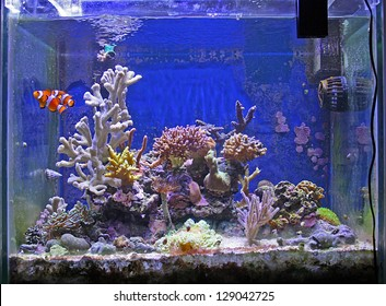 Beautiful Fish and coral tank