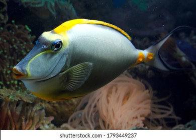 Beautiful fish on the seabed and coral reefs, underwater beauty of fish and coral reefs