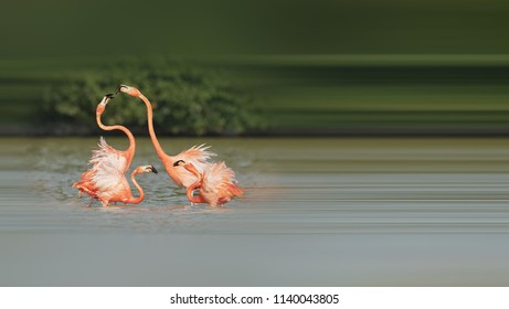 Beautiful flamingo foraging