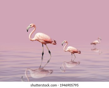 Beautiful flamingos walk on the lake at the pink sunset. Exotic birds stand in pink water. Wild nature background.