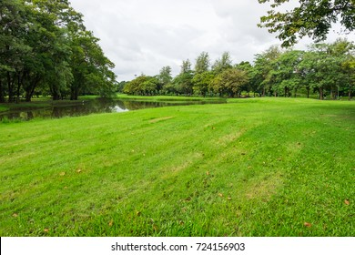Beautiful flat green Grass in the park and trees around yard with  light in the sky with cloud for background with copy space