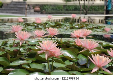 beautiful floer in pond