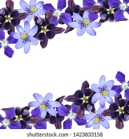 Beautiful floral background of liverwort, aquilegia and clematis. Isolated
