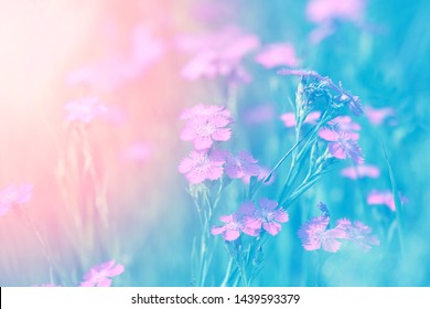 Beautiful floral background photographed close up on bright background