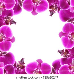 Beautiful floral background of purple orchids