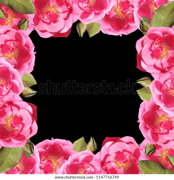 Beautiful floral background of roses. Isolated