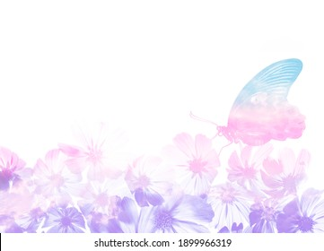 a beautiful floral background with a tropical butterfly