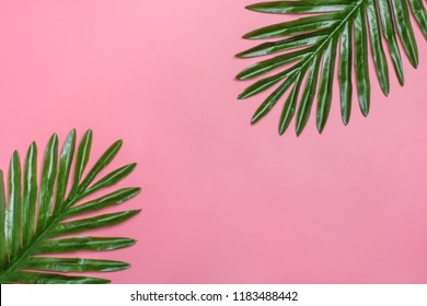 Beautiful floral background of tropical tree leaves monstera and palm, with a space for text, flat lay composition Summer, exotic, travel, paradise, beauty concept Top view Copy space Pink millennial