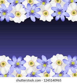 Beautiful floral background of white daffodils and liverwort