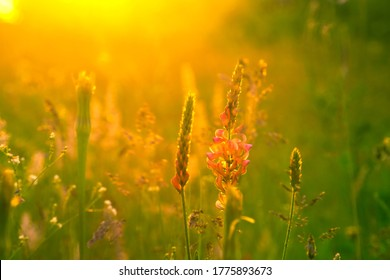 Beautiful floral background. Wild flowers in the bright rays of the setting sun.