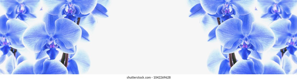 Beautiful floral border of blue orchids on a white background for design banner with copy space