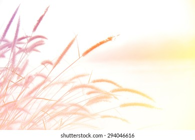 Beautiful Floral bright Background. made with color filters