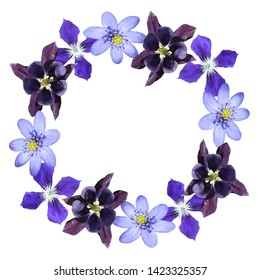 Beautiful floral circle of liverwort, aquilegia and clematis. Isolated