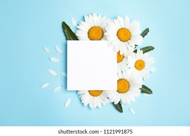 Beautiful floral composition with chamomile flowers and card on color background, top view