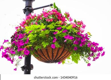 Beautiful floral hanging basket in urban city.
