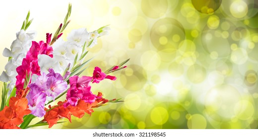 Beautiful floral nature background with gladiolus for solemn day