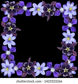Beautiful floral pattern of liverwort, aquilegia and clematis. Isolated