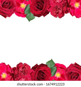 Beautiful floral pattern of pelargonium and rose. Isolated
