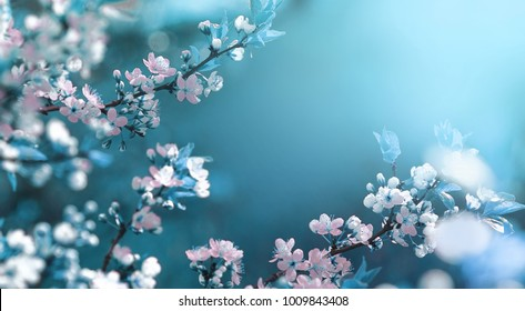 Beautiful floral spring abstract background of nature. Branches of blossoming apricot macro with soft focus on gentle light blue sky background. For easter and spring greeting cards with copy space - Shutterstock ID 1009843408