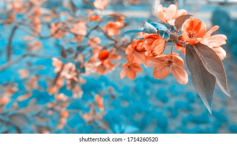 Beautiful floral spring abstract background of nature.