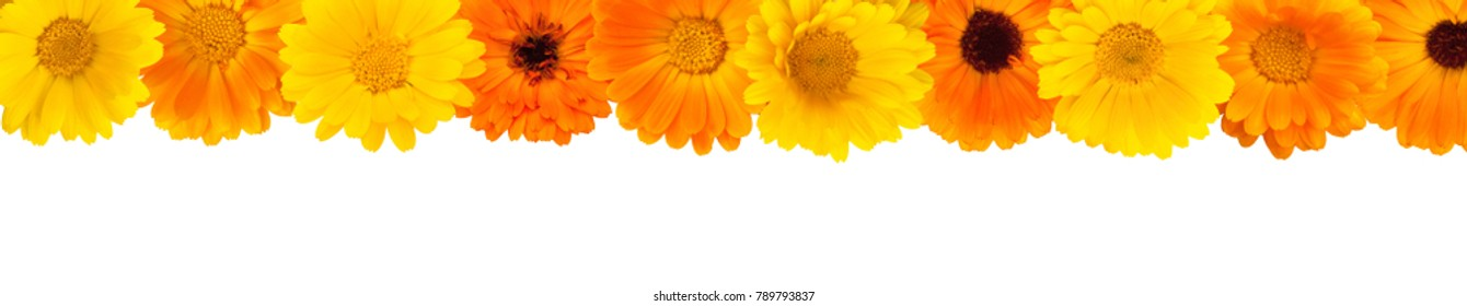 Beautiful Floral top border. Floral arrangement of yellow and orange calendula flowers on isolated white background for design. Flat lay. Wide screen Web banner or flyer with copy space